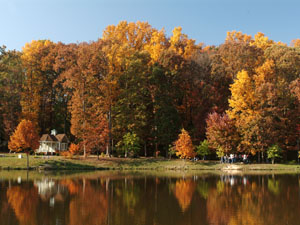 Accent: pond in fall (300px)